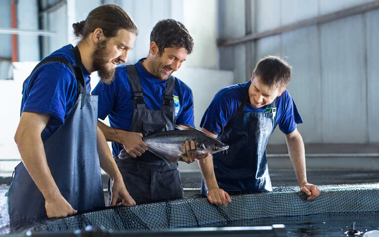 Micarna – Innovation KM Seafood